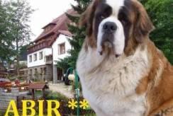 Pensjonat ABIR - Karpacz noclegi